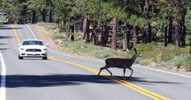 Avoid deer-vehicle collisions with these tips