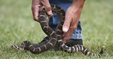 Local canines learn caution for poisonous reptiles