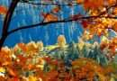 Popular 'Fall Colors' map invites autumn tourism