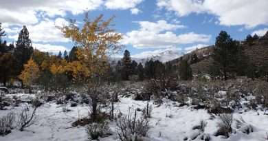 Land Trust conserving working ranches in Sierra Valley