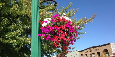 Quincy hanging flower baskets are coming back, but need community support