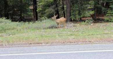 Remain alert to survive deer-vehicle collisions