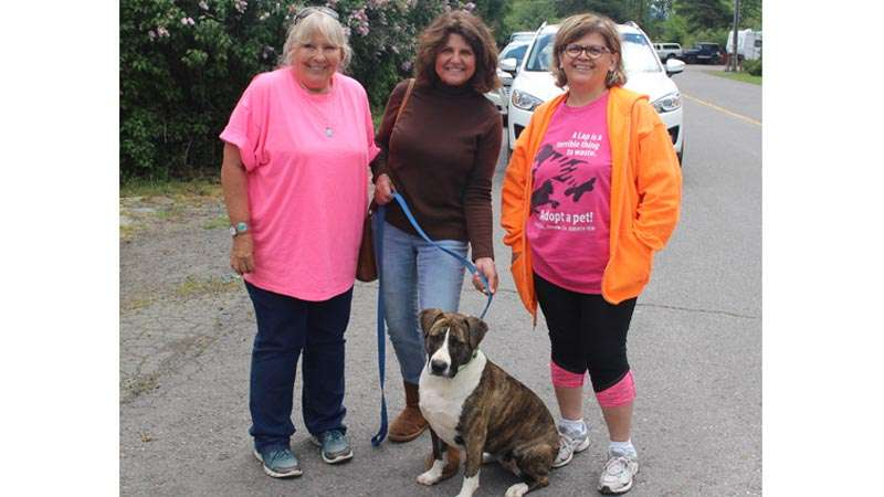 Yard sale is fundraiser for PAWS and Animals in Need - Plumas News