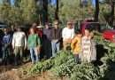 Christmas trees support three Boy Scout units