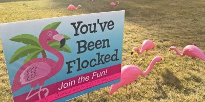 Pretty pink flamingos raise funds for QES' Plumas to the Pacific studies